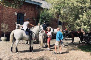 paardenhotel2-1600